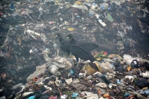 Die Müllkippe (7)